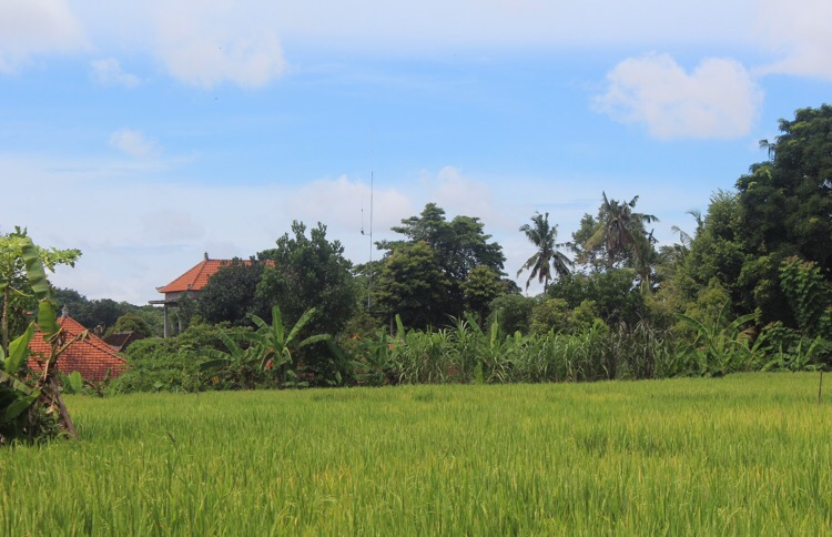 EATING, PRAYING AND LOVING IN UBUD